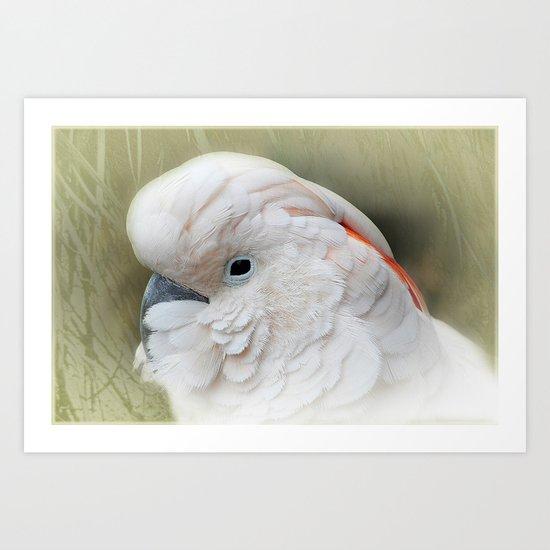 Kakadu Art Print