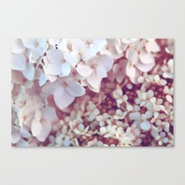 Pink and White Flowers (Color) Canvas Print