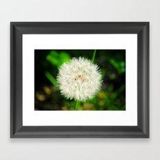 Dandelion. Framed Art Print