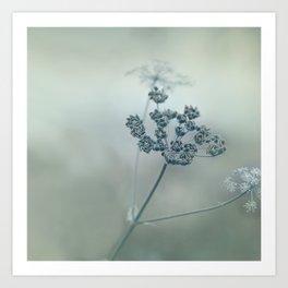 Pastel herbs - Cow Parsley Art Print