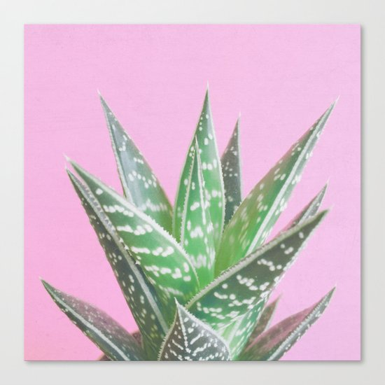 Pink Aloe Tiki Canvas Print