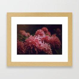 Pink Bellingrath Floral Framed Art Print