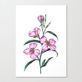 Botanical Illustration  Canvas Print