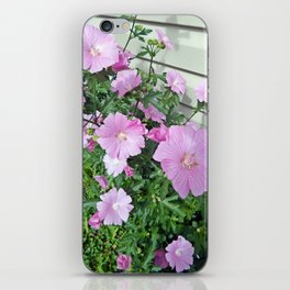 Pink Musk Mallow Bush in Bloom iPhone Skin