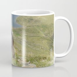 Horse near lake  landsape view Coffee Mug