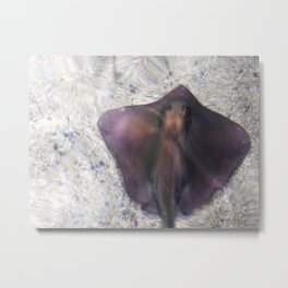 View from Above: Stingray Metal Print