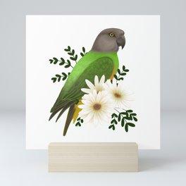 Senegal Parrot Mini Art Print