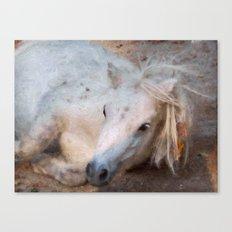 My little horse Canvas Print