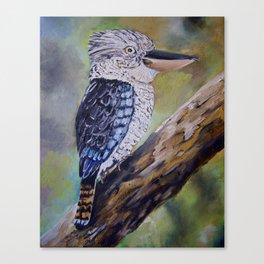 BLUE WINGED KOOKABURRA 2 Canvas Print