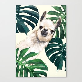 Sneaky Llama with Monstera Canvas Print