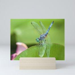 Blue Dasher Mini Art Print