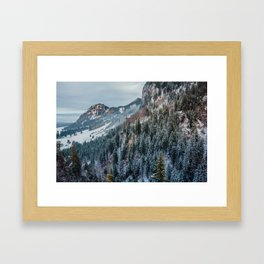 Forest - Bavarian alps Framed Art Print