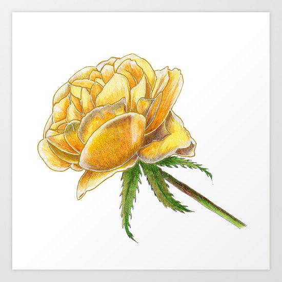 Yellow Rose on white by katealli