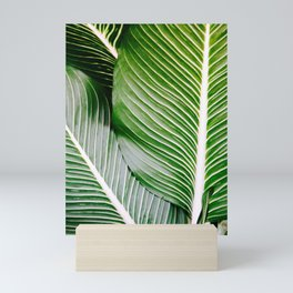 Big Leaves - Tropical Nature Photography Mini Art Print