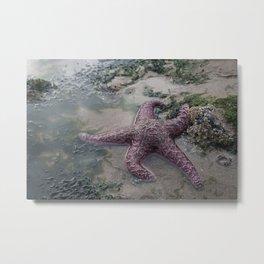 Sea Star Metal Print