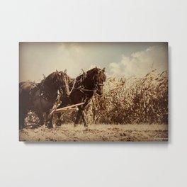 Plow Horses Metal Print