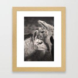 Llama Hugs Framed Art Print