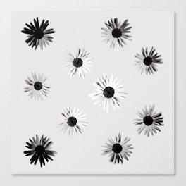 Shadow Box Flowers Canvas Print