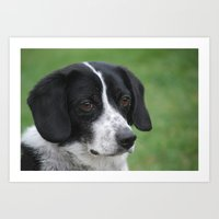 snoopy Art Prints featuring Snoopy Lookalike  by Melinda F Schneider