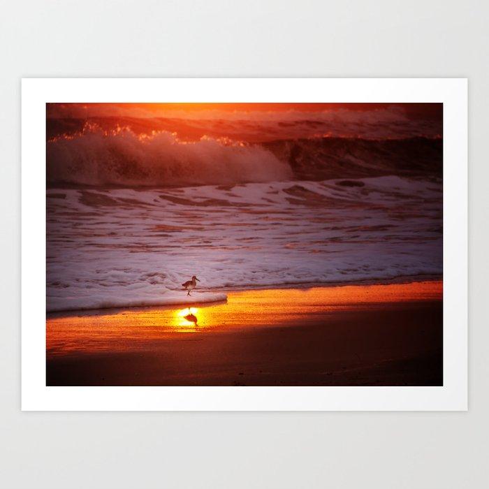 Sunny Sandpiper Art Print