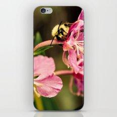 Bee's Delight iPhone & iPod Skin