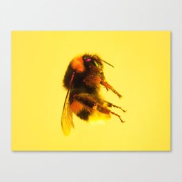 Bugged #31 Canvas Print