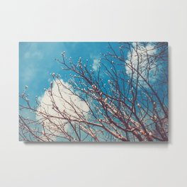 Spring Trees Buds Sunny Day Blue Sky Metal Print