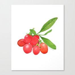 Goji Berry Canvas Print
