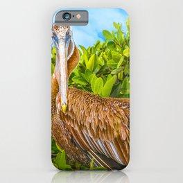 Big Pelican at Tree, Galapagos, Ecuador iPhone Case