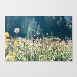 FALL FIELDS | 01 Canvas Print