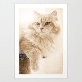 Siberian cat on his loved cat tree Art Print