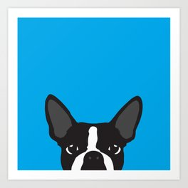 Boston Terrier Blue Art Print