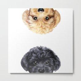 Toy poodle Blond & Black Metal Print
