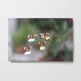 A Beauty Orquídea Metal Print