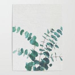 Eucalyptus II Poster