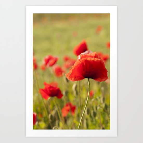 Romantic Poppy field Art Print