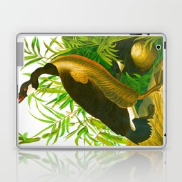 Canada Goose John James Audubon Vintage Scientific Birds of America Illustration Laptop & iPad Skin