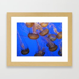 Monterey Bay Jellyfish Framed Art Print