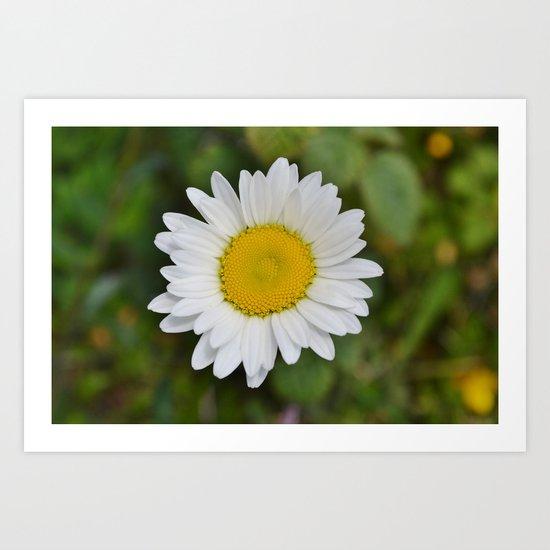 Daisy, Pure & Simple Art Print