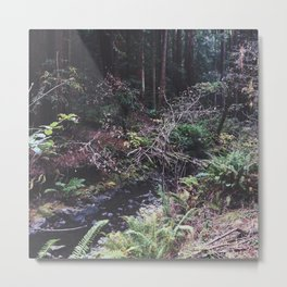 Muir Woods Creek Metal Print