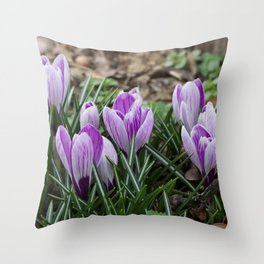 First crocuses of the year Throw Pillow