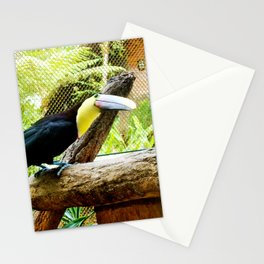 Curious Toucan Stationery Cards