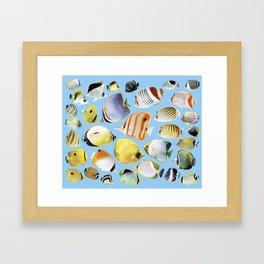 Butterflyfish_Skyblue base Framed Art Print