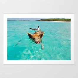 Swimming Pig and Bird Art Print