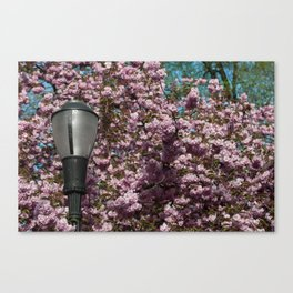 Blossoms and a Lamp Post Canvas Print