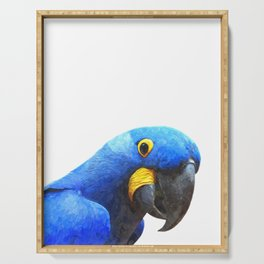 Blue Parrot Portrait Serving Tray