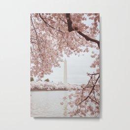 Cherry Blossoms on Washington Metal Print