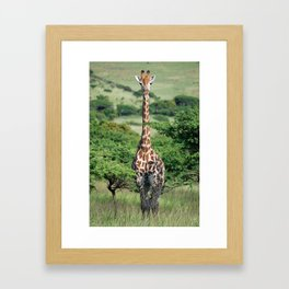 Giraffe Standing tall Framed Art Print