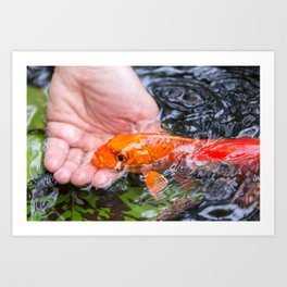 A Koi In The Hand Photograph by Priya Ghose Art Print