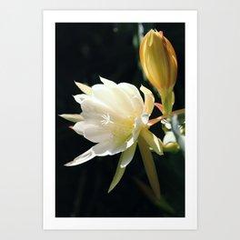 flower Königin der Nacht Art Print